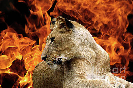 Lion and Fire by Inspirational Photo Creations Audrey Woods