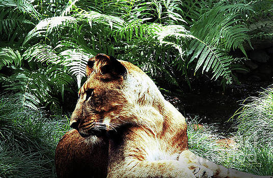 Lion at rest by Inspirational Photo Creations Audrey Woods