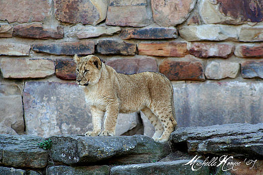 Lion Cub by Michelle Koonce
