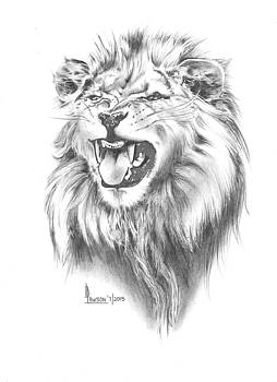 Lion by Dave Lawson