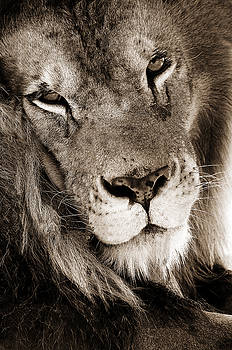 Lion by Dick Pratt