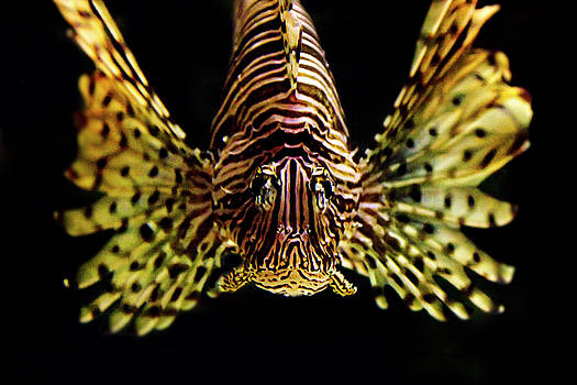 Janet Fikar - Lion Fish 3
