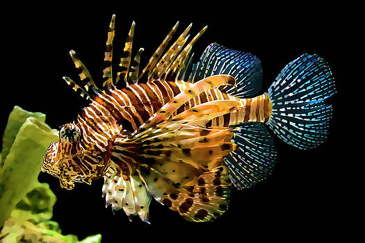 Janet Fikar - Lion Fish 4