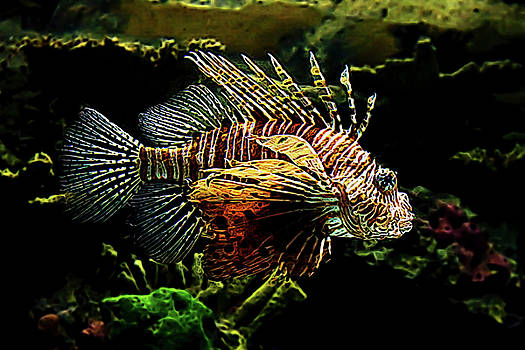 Janet Fikar - Lion Fish 5