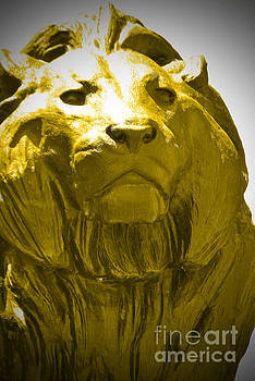 Jost Houk - Lion Gold