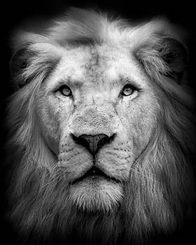 Lion Head - BW by Cassidy LionHeart