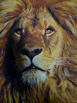 Lion King by Mandy Thomas