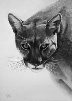 Lion of the Andes by Vishvesh Tadsare
