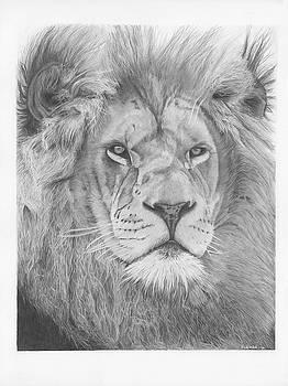 Lion by Sandra Weiner