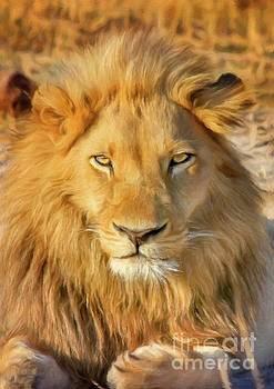 Sarah Kirk - Lion