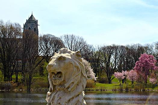 Andrew Davis - Lion Statue with Cherry Blossoms and Cathedral Basilica of the Sacred Heart in Background