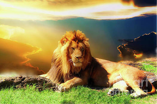 Lion Sunset by Inspirational Photo Creations Audrey Taylor