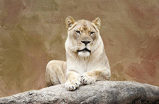 Lioness by Laura Greene