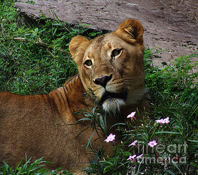 Lioness Love by Kami Catherman