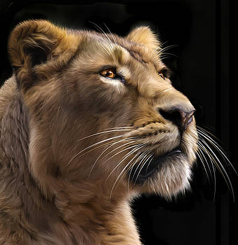 Lioness by Mike Gorton