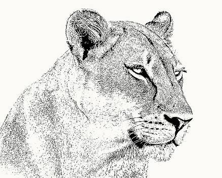 Lioness Portrait by Scotch Macaskill