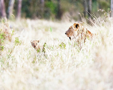 Lioness with Baby Cub in Grasslands by Susan Schmitz