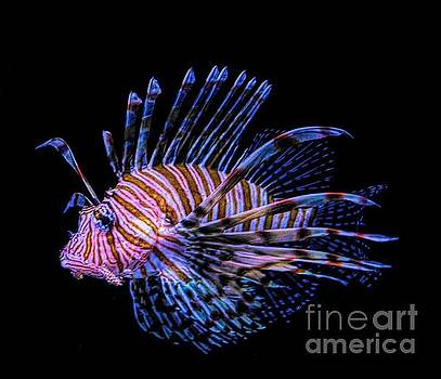 Paulette Thomas - Lionfish Print One