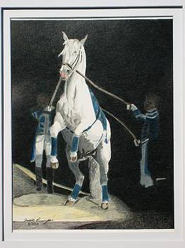 Lipizzaner Stallion by Judith Pennington