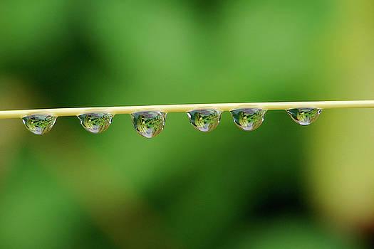 Liquid pearls by Fir Mamat