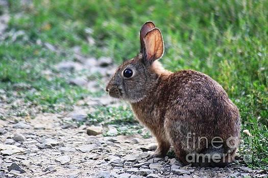 Nick Gustafson - Litlle Brown Bunny 2