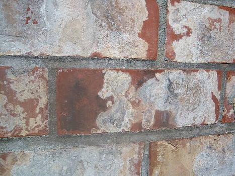 Little Bear on a Brick Wall by Ken Day