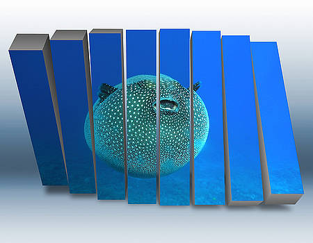 Little Big Pufferfish by Marvin Blaine