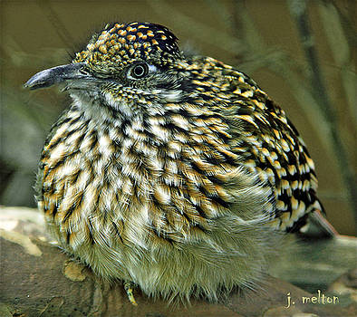 Little Bird by Jack Melton