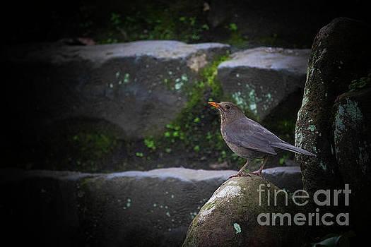 Little Bird On The Rock by Naomi Burgess