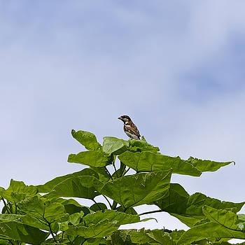 Little bird watch by Adrian Bud