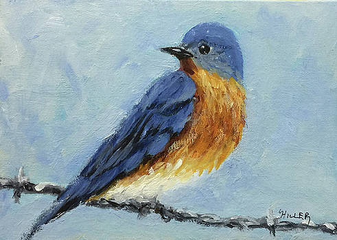 Little Bluebird by Linda Hiller