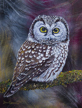 Dee Carpenter - Little Boreal Owl