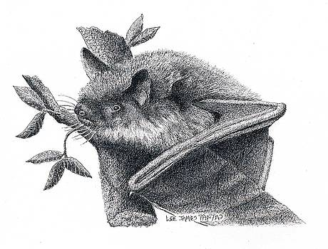 Lee Pantas - Little Brown Bat