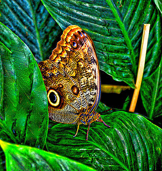 Little Butterfly by Collette Rogers