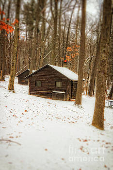 Little Cabin in the Woods by Elizabeth Dow
