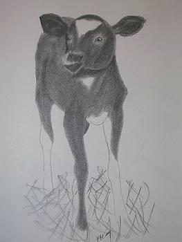 Little Calf by Kristen Hurley