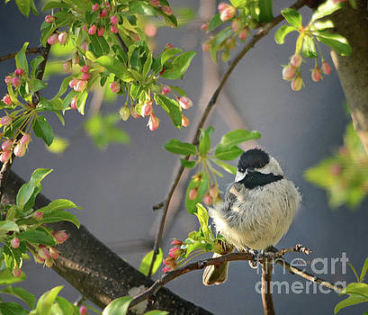 Little Chickadee In the Pink by Nava Thompson