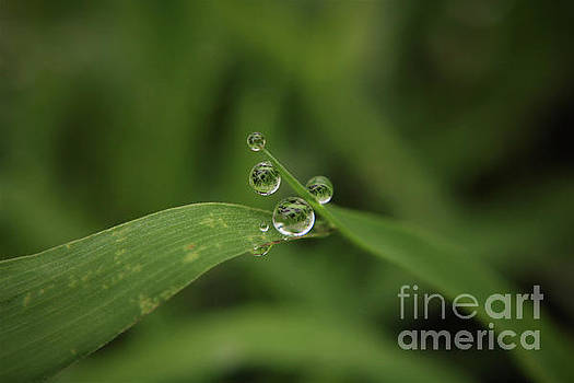Little Daredevil Droplets by Dee Winslow