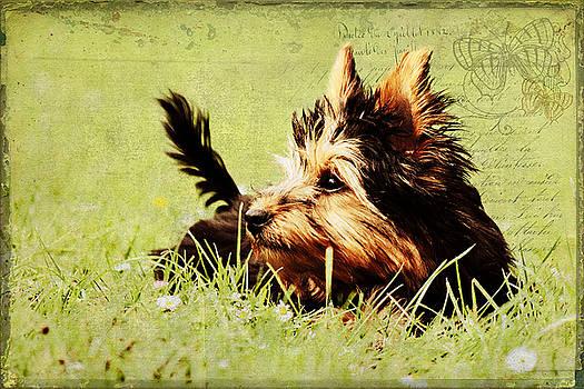 Angela Doelling AD DESIGN Photo and PhotoArt - Little dog
