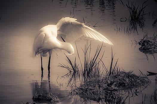 Little Egret by Bren Ryan