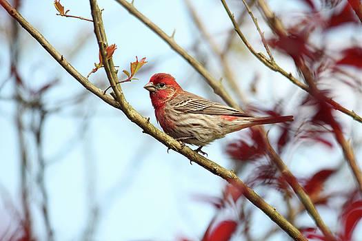 Little Finch by Trina Ansel