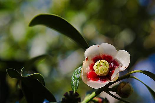 Little flower by Jorge Mejias