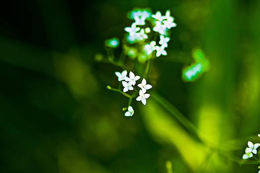 Little Flowers by Leo Bello