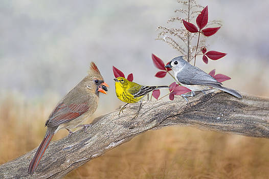 Little Gathering of Feathered Friends by Bonnie Barry