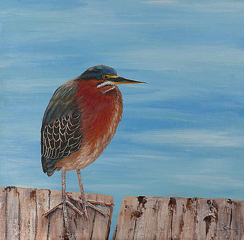 Dee Carpenter - Little Green Heron
