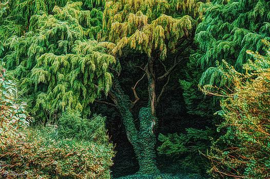LIttle Grove by Brian Shepard