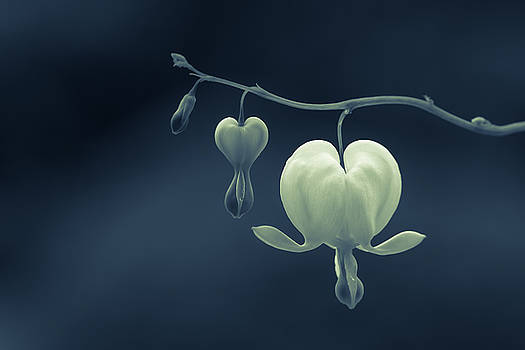 Little Hearts by Silke Tuexen