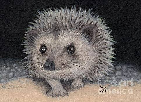Little Hedgehog Baby Peeking Out by Sherry Goeben