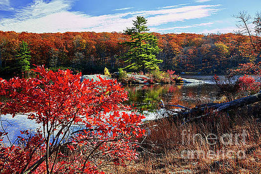 Little Island  During Seasons Change by George Oze