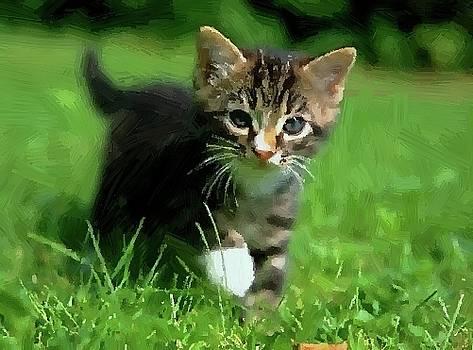 Little Kitten Into Grass by Subesh Gupta